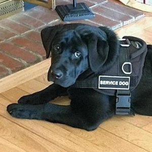 the-life-of-a-service-dog23